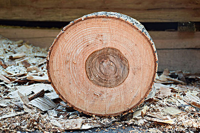 建筑木材回收